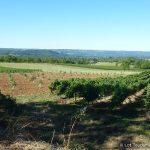 Lot - Vignoble de Glanes