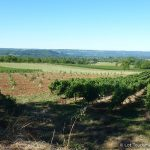 Lot - Vignoble de Glanes
