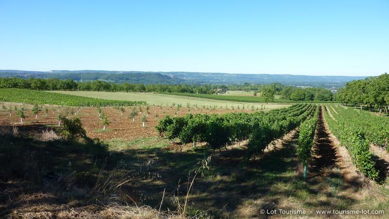 Lot- Vignoble de Glanes